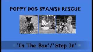 POPPY DOG SPANISH RESCUE - Poppy learning 'In The Box'/'Step In'