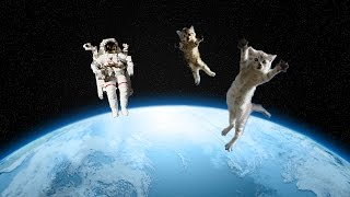 Why Did the Air Force Play with Cats in Space?