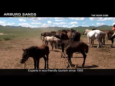 ARBURD SANDS tourist camp mongolia