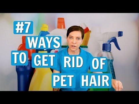 Pet Hair Removal - 7 Best Ways
