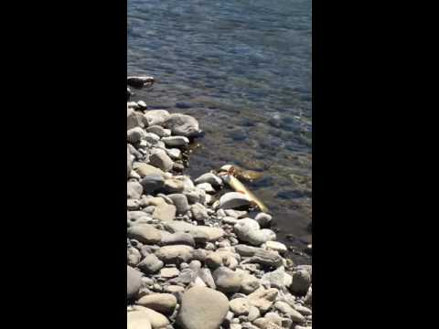 Keith Seidel fly fishing in Yellowstone