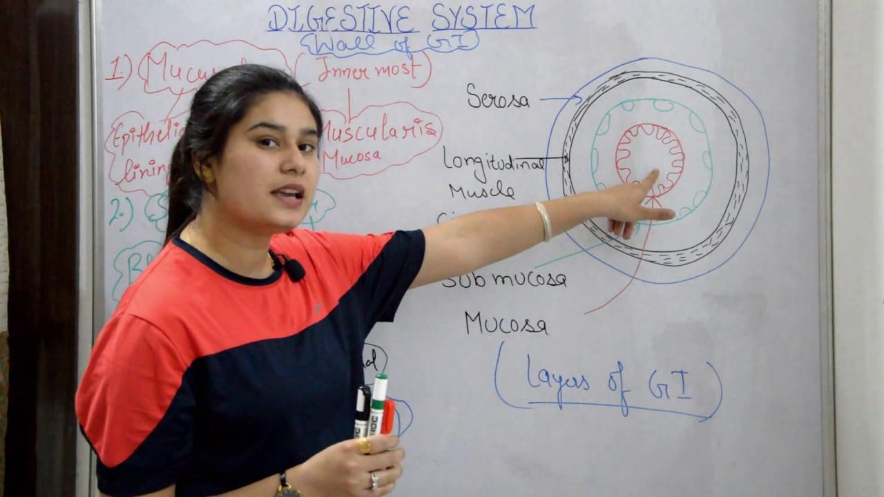 Digestive system anatomy & physiology in hindi ...
