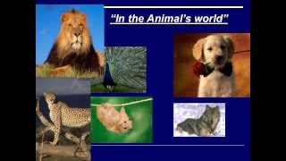 "Презентация 1 ""Животные"""