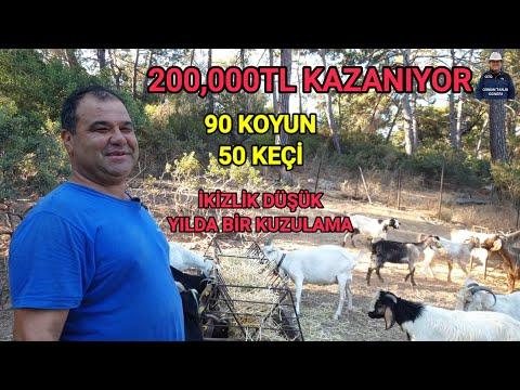 30,000TL HARCIYOR 200,000TL KAZANIYOR | 50 KEÇİ 90 KOYUN | GÖÇEK