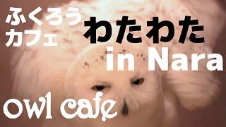 奈良市にあるふくろうカフェわたわたに行きました。 予想以上に可愛かっ...