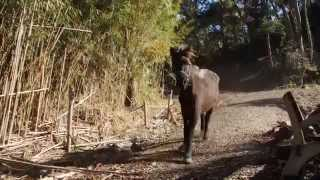 11月、放牧場へ駆け下りていくメンバーの様子。 ラストの2頭は常にマイ...