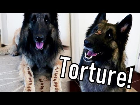 Testing My Dog's Self Control