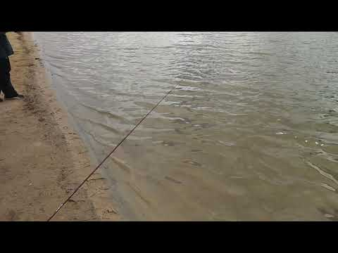 Monster Trout.   Fishing Prospect Lake In Colorado Springs Colorado
