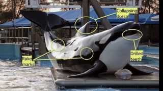 The Shocking Truth Behind Seaworld
