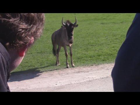 Trip To Fossil Rim Wildlife Center | SmileworksFilms
