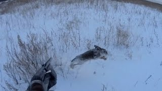 охота на зайцев тропление # Интервью с ОхотТВ