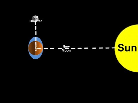 Space Science Tutorial: Spring and Neap Tides