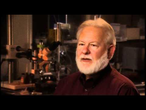 David Nichols: DMT probably has a shorter receptor occupancy