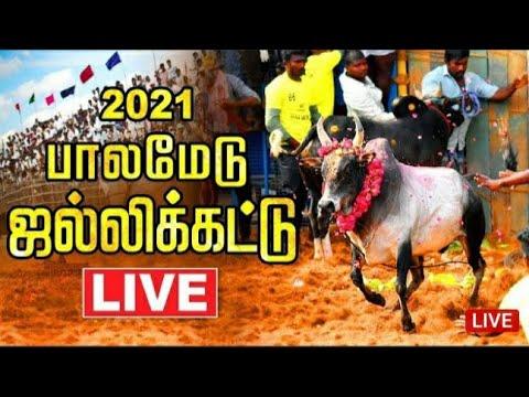 Download 🔴Palamedu Jallikattu Live 2021             பாலமேடு ஜல்லிக்கட்டு நேரலை
