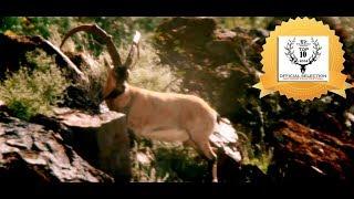 "ZAC GRIFFITH FLORIDA MOUNTAINS IBEX HUNT: ""Season 2, Part 1"""