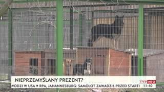 Zwierzęta jako pomysł na prezent? (TVP Info, 23.12.2013)