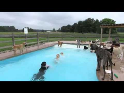 Fiesta de perros en la piscina!