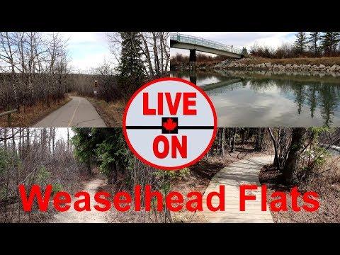 Hiking Through Weaselhead Flats Park In Calgary Alberta