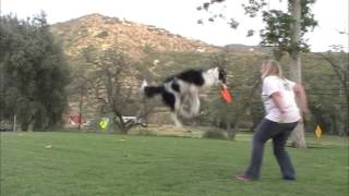 Twix's New Disc Trick - Boing & Catch The Disc