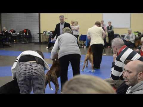 Scottish Boxer Club Championship Show 2017 - Dog CC