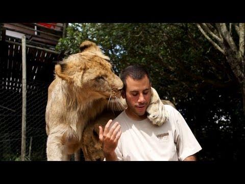 לקבל אהבה מ-2 אריות