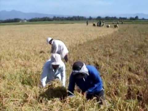 Organic Rice Farming Testimony