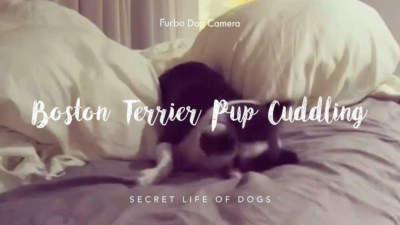 Can You Leave a Dog Alone Overnight? | Furbo Dog Camera