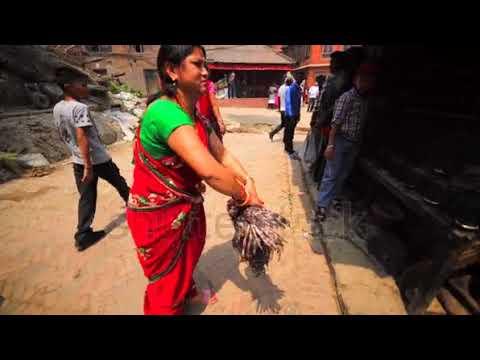 saree women kill chicken