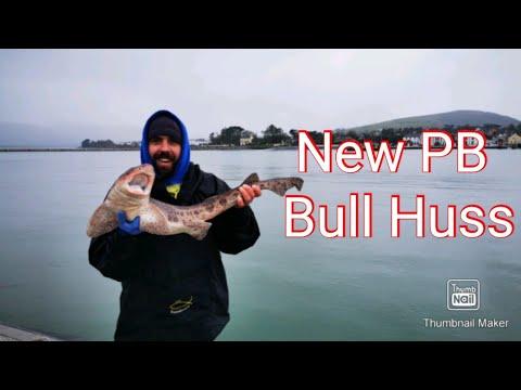 PB Bull Huss In Valentia, Ireland