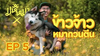 Ma Hue Mha X EP5 - KhaoJao the goofy dog (EN)