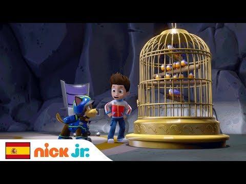 Los Pájaros Cantores Vuelven a Casa   Patrulla Canina   Nick Jr. España