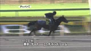 デインドリーム 追い切り ジャパンカップ 2011/11/27 P.シールゲン(独)