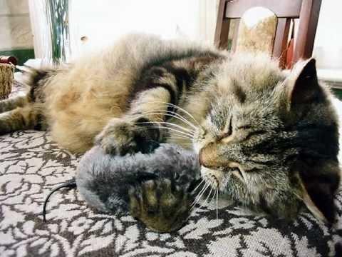 Fluffy the very fluffy cat (2005) xxx