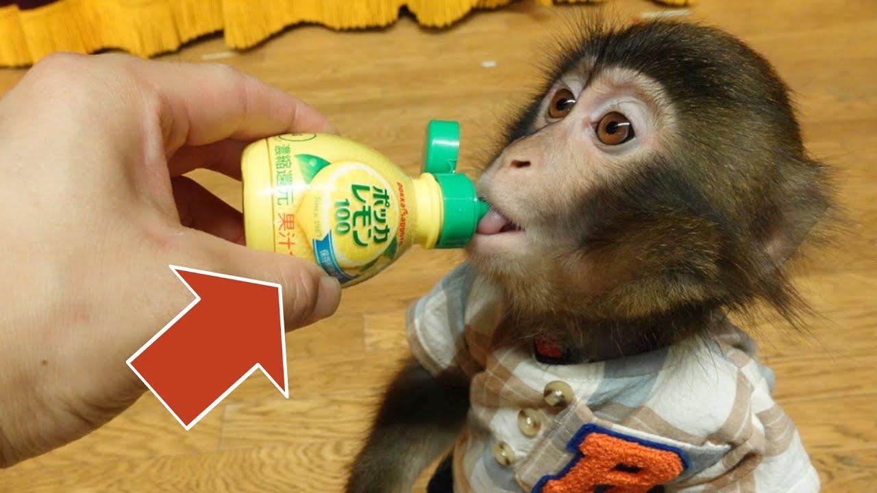 アニマルトレーナーはお猿さんの味覚をバグらせることもできます。