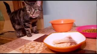 Репортер. Коты особого назначения