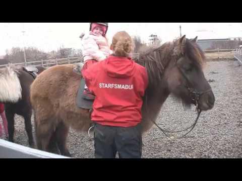 Iceland Reykjavik Zoo - Húsdýragarðurinn