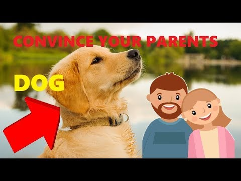 HOW TO CONVINCE YOUR PARENTS TO LET YOU GET A DOG