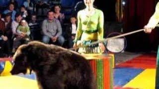 Медведь в цирке набросился на зрителей