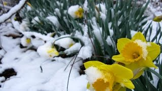 Bitkilerin Meyve Ağaçlarının Soğuk Dayanımı En Düşük Dayanıklılık Dönemi Mart Ayında Oluşuyor