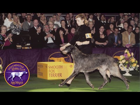 WKC Archives: Scottish Deerhound, Hickory