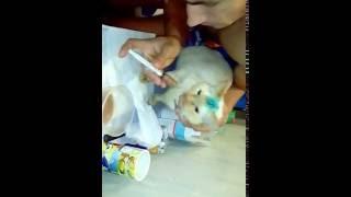 Как кормить кота