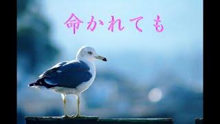 1967年に森進一さんの歌唱でリリースされました。今回は、八代亜紀...