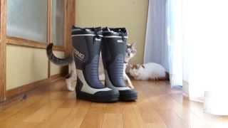 長靴とくろ Boots and cat