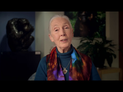 Make a Difference with the Jane Goodall Institute