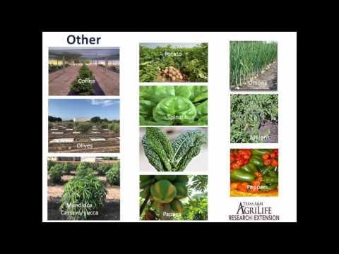 Dr. Juan Landivar, Resident Director Texas A&M AgriLife Research
