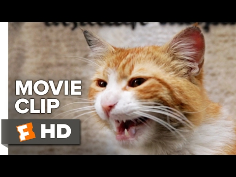 Kedi Movie CLIP - Cat Fight (2017) - Documentary