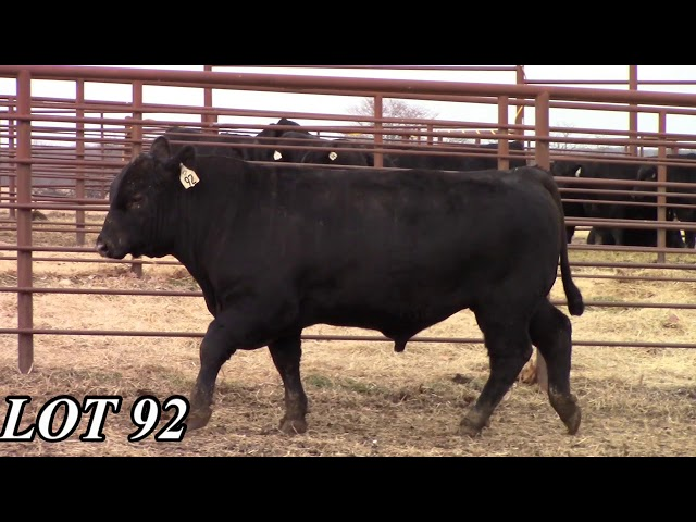 Mead Angus Farms Lot 92