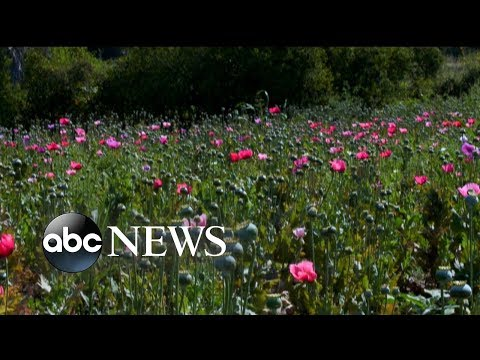 Grandmother deported from US says she harvests poppy in Mexico for money
