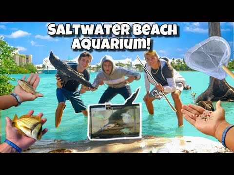 DIY EXOTIC BEACH FISH AQUARIUM!! *Crazy*