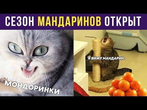 Приколы. СЕЗОН МАНДАРИНОВ ОТКРЫТ | Мемозг #151